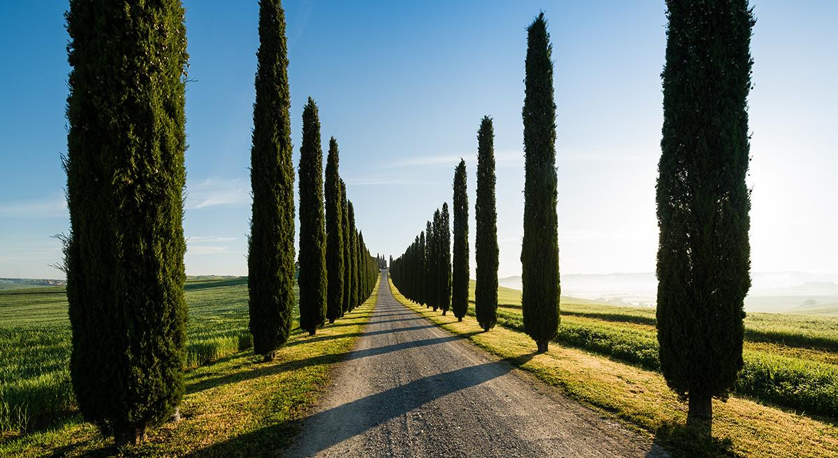 puiden ympäröimä tie