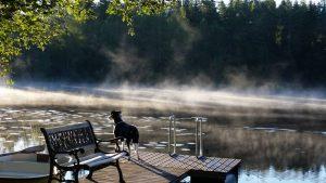 koira seisoo laiturin päässä, vedestä nousee usvaa