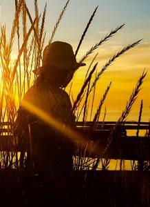 Heinikossa oleva ihminen ja auringonlasku